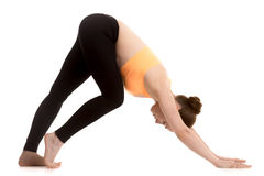 Preparation for adho mukha svanasana yoga pose for beginner Royalty Free Stock Photo