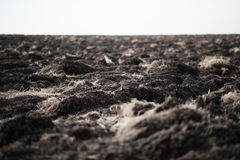Preparation of agricultural land to sow Royalty Free Stock Photography