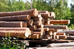 Preparation of business wood. Stock Photography