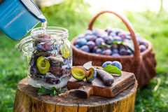 Preparation for canned plums in summer Stock Images