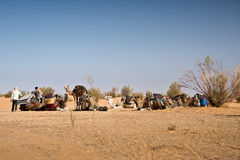 Preparation of a caravan of camels in the Sahara royalty free stock photography
