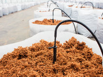 Preparation coco peat for cultivation vegetable Stock Photos
