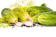 Preparation of cucumbers for salting Royalty Free Stock Photo