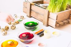 Preparation for Easter. Painting small quail eggs for Easter hunter. Colorful paints for egg`s decoraion.  stock photos
