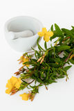 Preparation of evening primrose oil Stock Photography