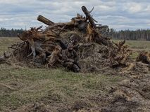 A man in camouflage with a rifle on the background of fallen trees. Preparation in the field for the spring hunt.Spring camouflage hides the man on the royalty free stock image