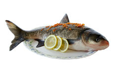 Preparation of the fish. Fresh fish against the white background Stock Photos