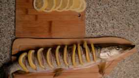 Preparation of fish with lemon in oil. stock video footage