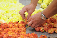 Preparation of Flower Carpet 2012 Stock Images