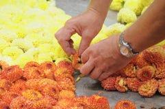 Preparation of Flower Carpet 2012 Stock Images