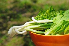 Preparation of green salad royalty free stock images