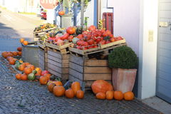 Preparation for Halloween. Halloween pumpkins are waiting for owners stock photos