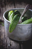 Preparation of low-salt pickled cucumbers Royalty Free Stock Photo