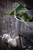 Preparation of low-salt pickled cucumbers Royalty Free Stock Photography