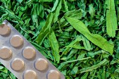 Preparation of medicinal herbs and a pack of tablets. Horizontally. Green leaves of medicinal herbs are prepared for drying and lie next to a pack of tablets Royalty Free Stock Photos