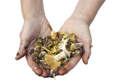 Preparation of mushrooms delicacies is a dirty work concept Royalty Free Stock Images