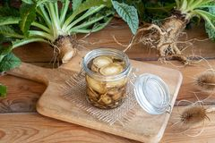 Free Preparation Of Alcohol Tincture From Wild Teasel Root In A Jar Royalty Free Stock Photo - 126260595