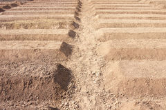 Preparation Of Soil For Planting Vegetable Royalty Free Stock Photography
