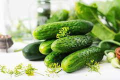 Preparation pickled marinated cucumbers Royalty Free Stock Photos