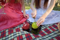 Preparation for picnic in forest Royalty Free Stock Photos