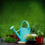 Preparation planting Herbs Backgroud Royalty Free Stock Image