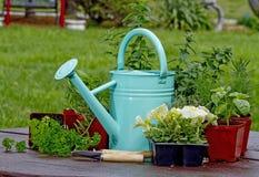 Preparation planting Herbs Royalty Free Stock Photos