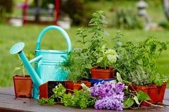 Preparation planting Herbs Stock Photos
