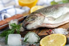 Preparation of rainbow trout. Raw trout, lemon slices, salt pepper and dill on wooden chopping board, selective focus royalty free stock image