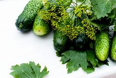 Preparation for salting of cucumbers Royalty Free Stock Photos