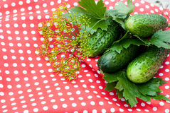 Preparation for salting of cucumbers Royalty Free Stock Photo