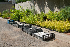 Preparation of seedlings and decorative gravel Royalty Free Stock Photo