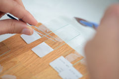 Preparation slides with tweezers and scalpel Royalty Free Stock Photo