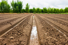 Preparation soil for cultivation vegetable Royalty Free Stock Images