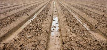 Preparation soil for cultivation vegetable Stock Images