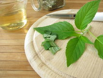 Preparation of tea with pineapple-scented sage Royalty Free Stock Photos