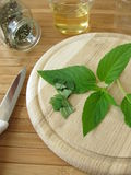 Preparation of tea with pineapple-scented sage Stock Images