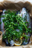 Preparation trouts for baking Stock Images