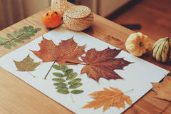 Preparations for autumn craft with kids. Herbarium from dried leaves Stock Photo