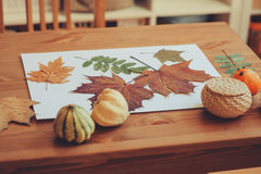 Preparations for autumn craft with kids. Herbarium from dried leaves Royalty Free Stock Photography