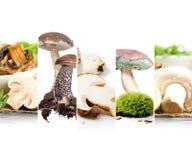 Preparato commestibile del fungo Fotografie Stock Libere da Diritti