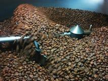 Preparato dei chicchi di caffè Immagine Stock Libera da Diritti
