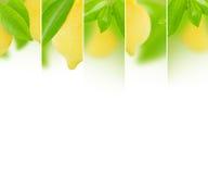 Preparato del limone Immagini Stock
