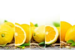Preparato del limone Fotografia Stock