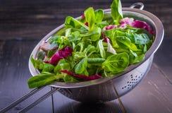 Preparato dell'insalata Fotografia Stock