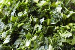 Preparato delle erbe dell'insalata Fotografie Stock Libere da Diritti
