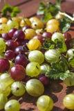 Preparato verde, rosso e giallo delle uva spina immagini stock