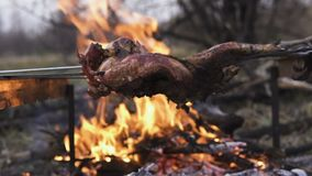 Preparazione dei gallinacei, cercante tema Cucinando un intero corpo del fagiano su un ferro infilza sopra un fuoco di accampamen archivi video