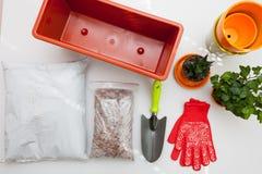 Preparazione dei semi e della stanza per la piantatura nel suolo Recipiente di plastica, guanti, drenaggio, fertilizzante, terra, fotografia stock