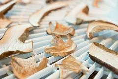 Preparazione del fungo in essiccatore Stagione specifica Fotografie Stock