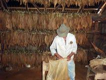 Preparazione del sigaro Fotografia Stock Libera da Diritti